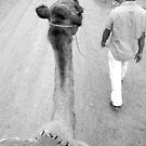 Camel Ride by Victoria Kidgell