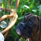 Boxer Dogs and Bubbles by ritmoboxers