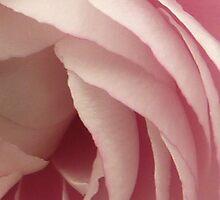 Petals Case by Lynn Wiles