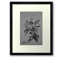 Lilies Sketch Framed Print