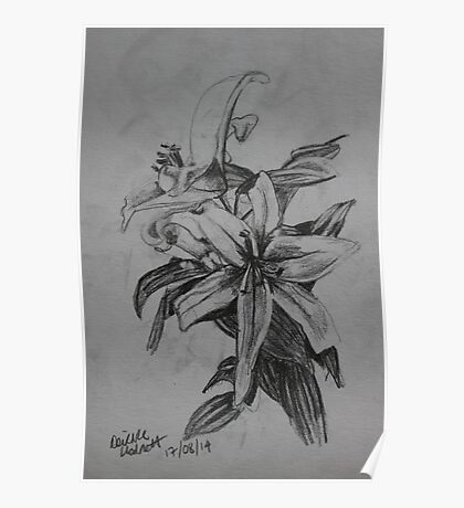 Lilies Sketch Poster