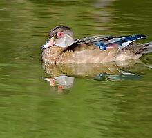 Female Wood Duck by Gerda Grice