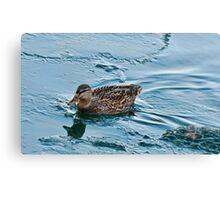 Female Mallard in Icing Water Canvas Print