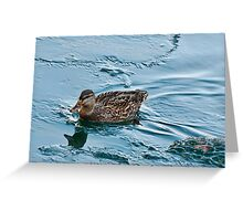Female Mallard in Icing Water Greeting Card