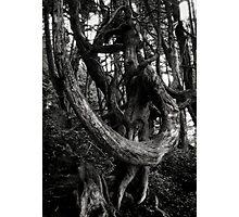 tree poetry Photographic Print