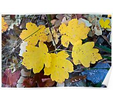 Yellow tree leaves Poster