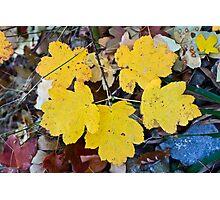 Yellow tree leaves Photographic Print