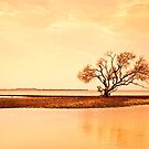 My Tree - Victoria Point Qld Australia by Beth  Wode