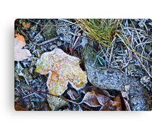 Dead foliage Canvas Print