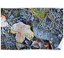 Dead foliage Poster