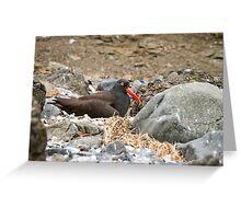 Nest of Rocks -- Black Oystercatcher Greeting Card