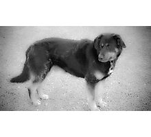 Man's Best Friend (Butch) Photographic Print