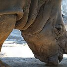 Detail of rhino  by acalax