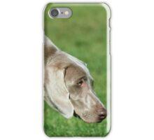 Weimaraner dog iPhone Case/Skin