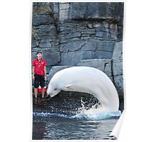 Beluga at Vancouver Aquarium Poster