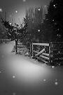 Winter by Ubernoobz
