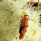 Love in Bloom by burnettbirder