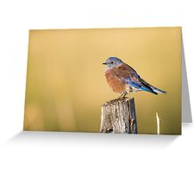 Red Bluebird -- Western Bluebird Greeting Card