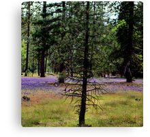 A forrest with sprinkles Canvas Print
