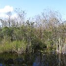 Everglades National Park by Susan Glaser