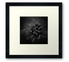The Black Dhalia Framed Print