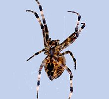 Spider iphone case by Karl R. Martin