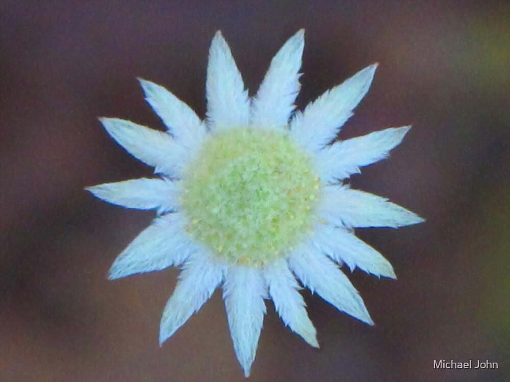 Little Flannel Flower by Michael John