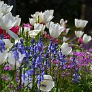 Spring Garden by Deborah Clearwater