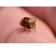 The Two-Horned Treehopper Photographic Print