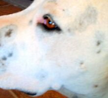 Freckles Says I Love You by BingoStar