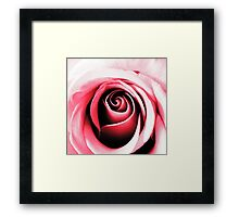 Contours of Pink Framed Print