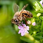 Bee Iphone cover by Darren Clarke