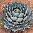 Cactus in Arizona by Shiva77