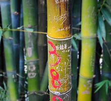 Bamboo graffiti, seen while on hike in Yangshuo, China by bethischeery