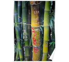 Bamboo graffiti, seen while on hike in Yangshuo, China Poster