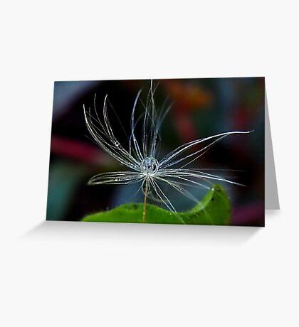 Dandelion and Raindrop Greeting Card