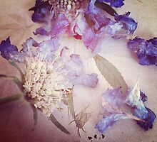 Purple Haze - Botanical by jbjobby
