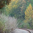 Autumn in East Texas by Lisa Holmgreen
