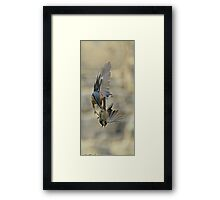 Nuthatch & Great Tit Fighting Framed Print