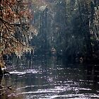 *Edisto River* by DeeZ (D L Honeycutt)