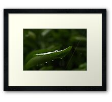 water drops 1 Framed Print