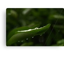 water drops 1 Canvas Print