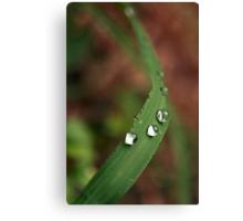 water drops 2 Canvas Print
