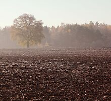 Lonely oak in frosty day by Antanas