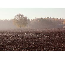 Lonely oak in frosty day Photographic Print
