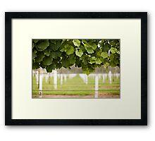Australian Vineyard  Framed Print