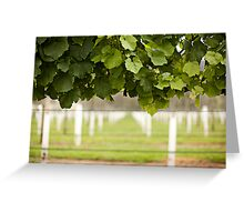 Australian Vineyard  Greeting Card