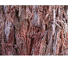 Wood bark Photographic Print