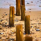 Posts Exposed On Beach by Darren Burroughs