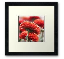 red monday Framed Print